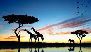 جاهای دیدنی قاره آفریقا؛ طبیعت، حیات وحش و تاریخ